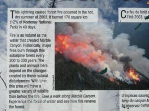 2003年の落雷による山火事では広大な公園の 12% を焼失