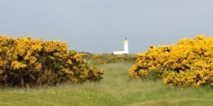 20130610-12-Kintyre-ハリエニシダと灯台